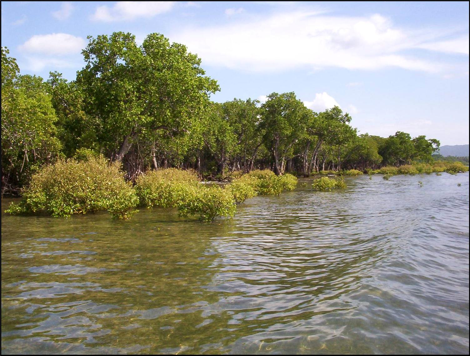 Mangroves - Their destruction contributes to a decline in biodiversity